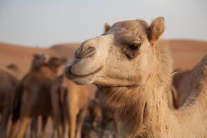 woestijnsafari3