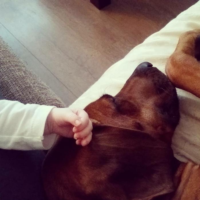 hond, kind