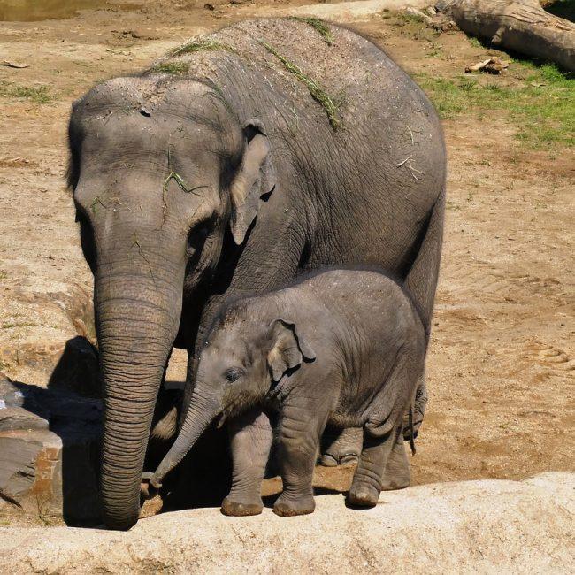 Olifant kinderuitjes dierentuin