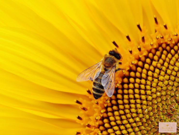 Kinderuitjes budget Nederland zoemt expositie wilde bijen