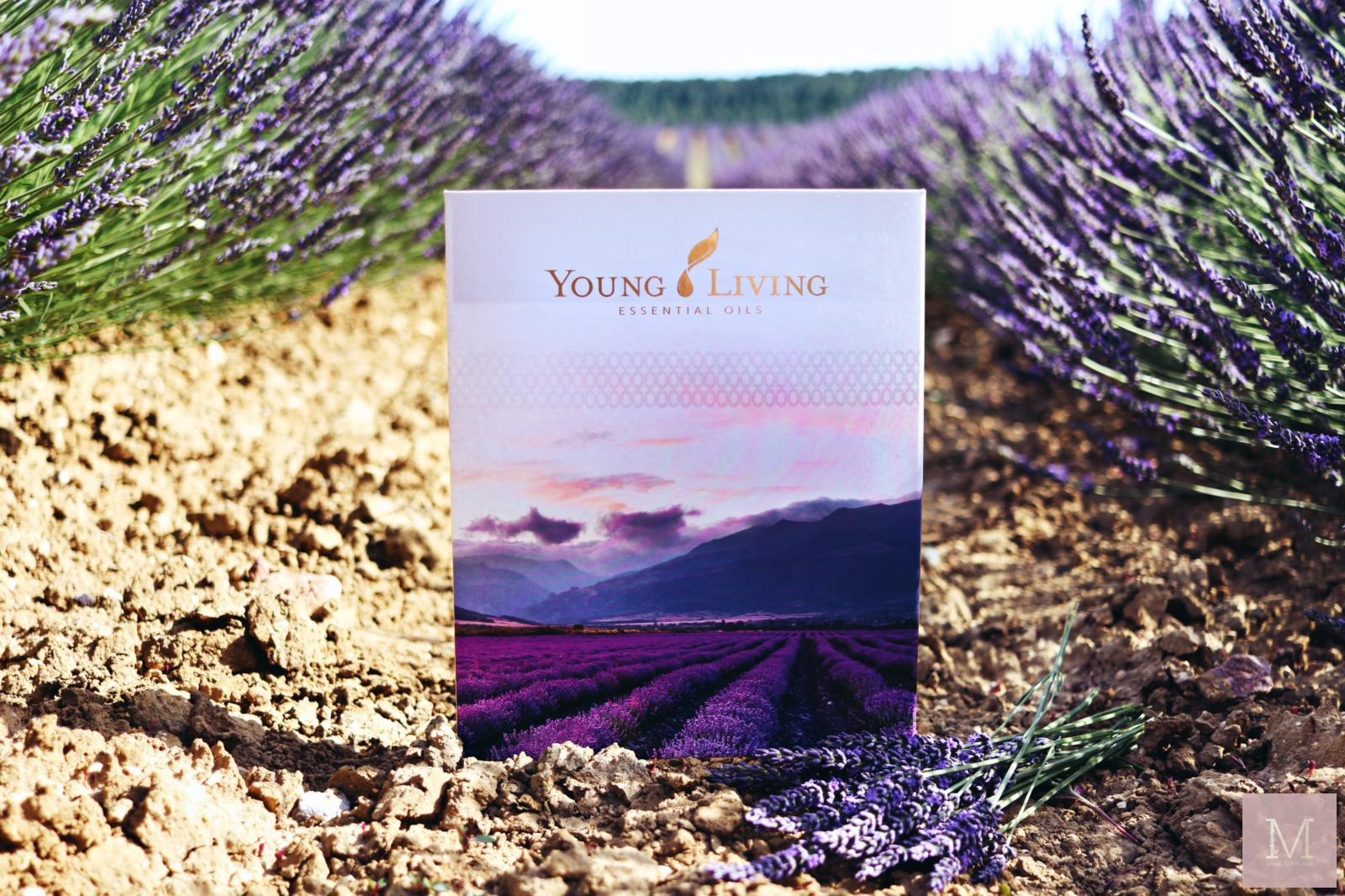 lavendelveld starterkit young living essentiele olie
