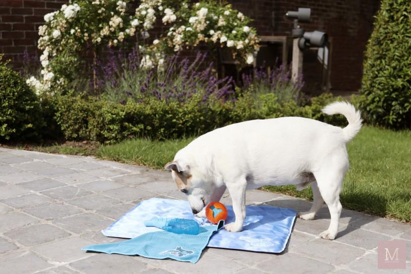 Juulke, Plein.nl, mama to the max, honden speelgoed