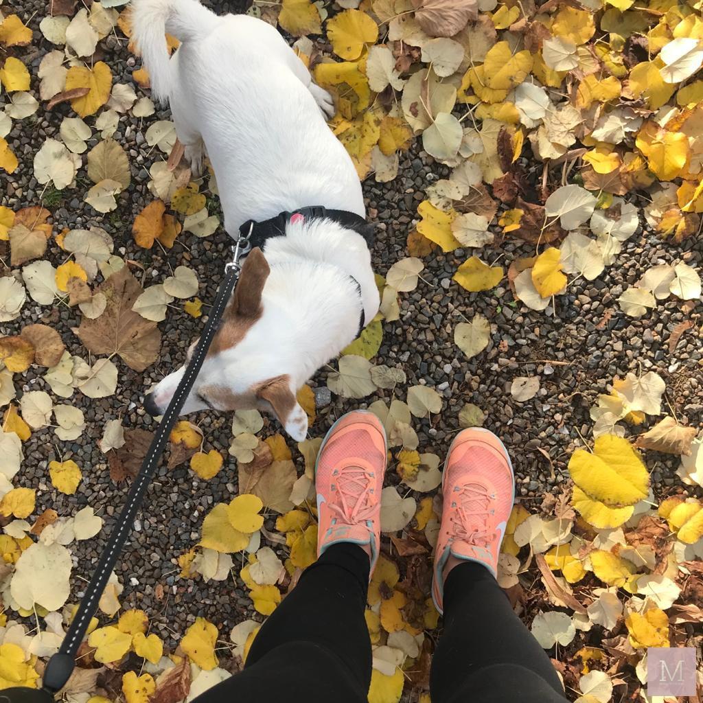 blokje om met juulke onze hond mamatothemax
